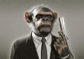 monkeywattitude