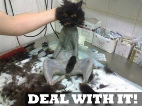 pussycat-shaved-not-happy