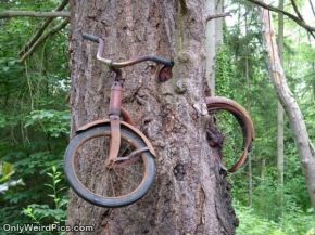 Weirdpictures-strange_Tree_Bike